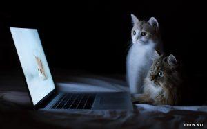 Cat Free Desktop Wallpaper HD 1920 x 1200 (1)