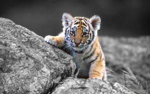 Cat Free Desktop Wallpaper HD 2560 x 1600